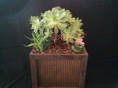 Living succulents garden in a wood and metal by UrbanSucculent, $139.00