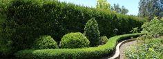 Top Hedging Plants