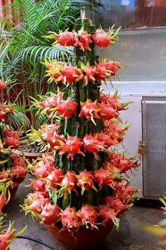 All plants. Fruit Plants, Fruit Garden, Edible Garden, Fruit Trees, Trees To Plant, Cactus Plants, Unusual Plants, Exotic Plants, Cool Plants