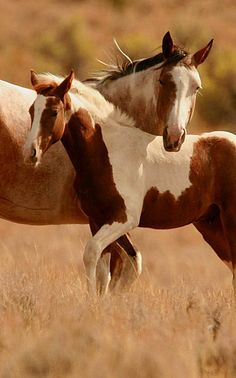Beautiful horses.