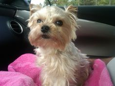 From my Blackberry - Carly relieved that she didn't have to stay at the vet very long.