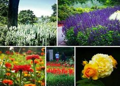 Dallas Arboretum - Dallas, Texas