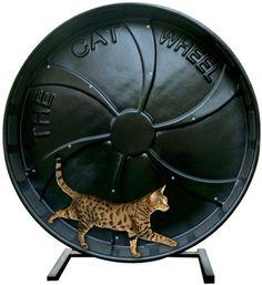 The Cat Wheel Exercise Wheel Toy Jeffers Pet Aataa | eBay