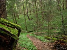 Great Smokey Mountains National Park, Tennessee