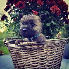 Cairn in a basket
