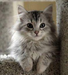 Ventajas de adoptar un gato cachorro, ¡te las contamos!