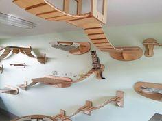 Cat on wall Goldtatze | #MindBlown