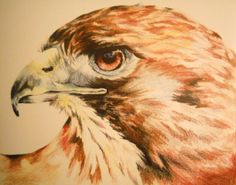 Red-tailed Hawk (PRINT)