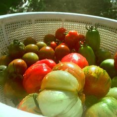 Heirloom Tomatoes. Today's harvest.