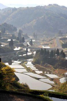 Terraced rice fields   棚田 tanada