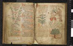 Herbals - #31daysofmedievalmanuscripts #write31days