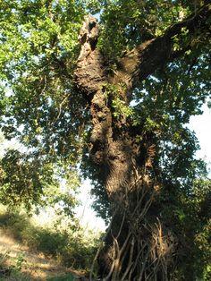 tree-shaped