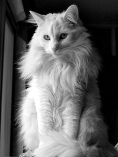 """I believe cats to be spirits come to earth. A cat, I am sure, could walk on a cloud without coming through"" ~ Jules Verne"