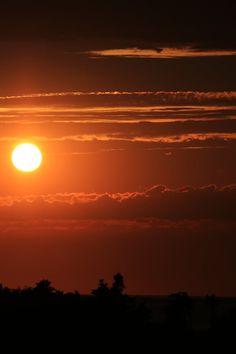 Tree Line Silhouette Under Sunset