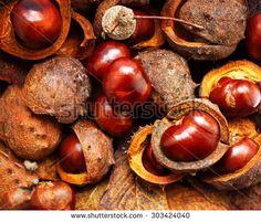 Ilmainen kuva Pixabayssa - Kastanjat, Syksyllä, Ruskea