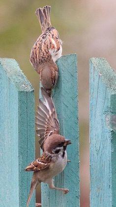I gotcha brother Funny Birds, Cute Birds, Pretty Birds, Beautiful Birds, Animals Beautiful, Nature Animals, Animals And Pets, Cute Animals, Animal Photography