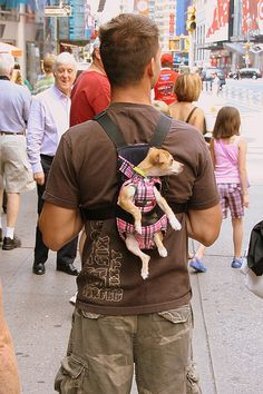 Real men wear chihuahuas Animals And Pets, Baby Animals, Funny Animals, Cute Animals, Animals Photos, Wild Animals, I Love Dogs, Puppy Love, Cute Puppies