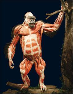 3D Anatomy - Gnomon Workshop - Using Knowledge of Anatomy to Create Better Characters | The Gnomon Workshop News