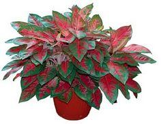 zimmerpflanzen f r dunkle r ume geeignet waldeck pinterest pflanzen zimmerpflanzen und. Black Bedroom Furniture Sets. Home Design Ideas
