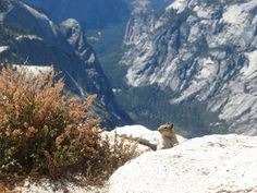 """""""Went to Yosemite National Park---at the top of Clouds' Rest I was greeted by a friendly squirrel"""" by wrobins1992"""