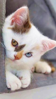 puppies and kittens - puppies kittens . puppies kittens together . puppies kittens so cute . puppies and kittens . cute puppies and kittens . puppies and kittens together Cute Cats And Kittens, I Love Cats, Crazy Cats, Adorable Kittens, Ragdoll Kittens, White Kittens, Kittens Meowing, Bengal Cats, Kitty Cats