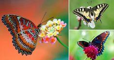 15+mariposas+únicas+y+hermosas