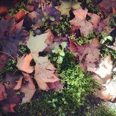 Imagen realizada con Instagram: Colores del otoño