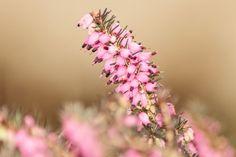 Winter flower by Julie Lafonte