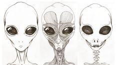 Alien anatomy 1 by RodolfoRamirez