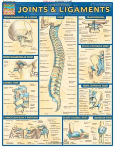 Joints & Ligaments (Quickstudy: Academic): Inc. BarCharts: 9781572226845: Amazon.com: Books