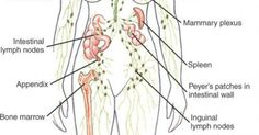The # most important actions  you need to take daily to drain your lymphatic system