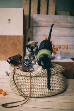 Big crochet round basket pattern. DIY crochet project how to crochet a basket using macrame cord Diy Crochet Basket, Crochet Basket Pattern, Crochet Patterns, Crazy Cat Lady, Crazy Cats, Toy Storage, Storage Basket, Diy Crochet Projects, Cat Basket