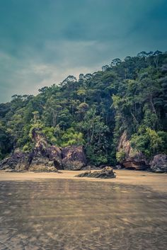 Bako National Park is perfect for hiking. Considering the short distance from Kuching, Bako National Park is ideal for a one or two-day travel trip! Read our travel tips to make the most of it ♡