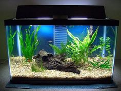 aquarium tank set up. Mine needs an extreme make over. Someting like this. More natural.