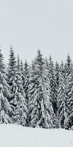 White, snow layer, pine trees, nature, 1080x2160 wallpaper