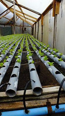 Hydroponic Farming – The Tilled Garden Hydroponic Farming, Aquaponics Greenhouse, Hydroponic Growing, Aquaponics Fish, Hydroponics System, Veg Garden, Vegetable Garden Design, Garden Planters, Vertical Farming