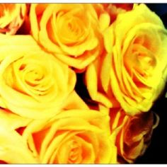Yellow roses...... Favorite rose color