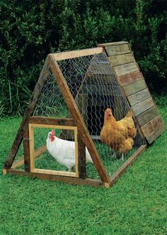 Build an A-frame chicken coop.  Keep chickens safe and comfy with a well-made coop