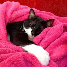 Tabatha fa la nanna..  #gatto #amore #love #romance #cat #cats #catstagram #instagood #kitten #kitty #kittens #pet #pets #animal #animals #petstagram #petsagram #photooftheday #catsofinstagram #ilovemycat #instagramcats #nature #catoftheday #lovecats #furry #sleeping #lovekittens #adorable #catlover #instacat