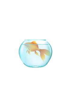 20 Types of Goldfish for Aquarium (Oranda, Shubunkin, Bubble Eye, Etc) Fish Vector, Vector Art, Goldfish Types, Golden Fish, Free Vector Files, Wishes For You, Make A Wish, How To Draw Hands, Bubbles