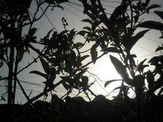 http://any-athayde.blogspot.com.br/
