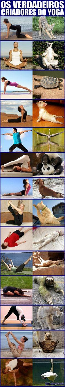 The real creators of Yoga funny animals pics