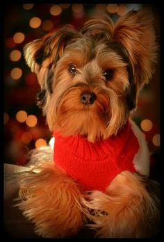 """If only the colors were vice versa, like all over black and lil"""" bit of brown, that is what Odis looks like!"""