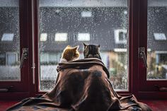 """The Cold Spring Days - The weather in The Netherlands haven't been any better, so here's another one of these series.  If you have time, then please take a look at an <a href=""""http://www.boredpanda.com/cats-friendship-photography-felicity-berkleef/"""">article</a> I recently wrote on BoredPanda and give it a like. It would mean so much to me :) This is the link: <a href=""""http://www.boredpanda.com/cats-friendship-photography-felicity-berkleef/"""">My Two Cats Have Different Personalities But Share…"""