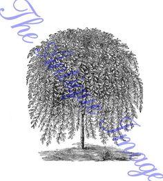 willow tree graphic