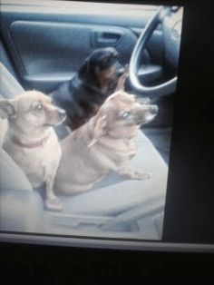 Three amigos ready to drive we got this mommy !