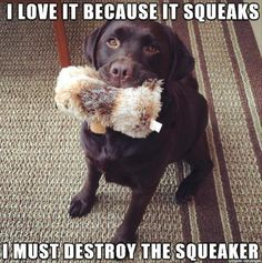 Funny Animal Pictures Of The Day  32 Pics