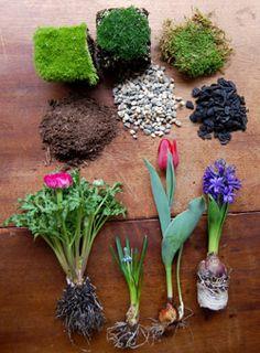 indoor bulb garden tutorial