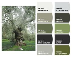 ColorSnap by Sherwin-Williams – ColorSnap by jodiwbb