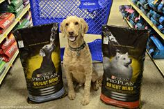 On today's blog post I'm taking a trip to @petsmartcorp to check out Purina @proplan ‪#‎BRIGHTMIND‬ dog food! ‪#‎sponsored‬